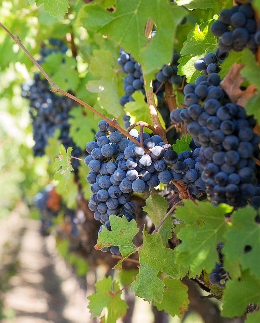 Μαύρο Μεσενικόλα Ροζέ Ημίξηρο Κρασί Καρδίτσας
