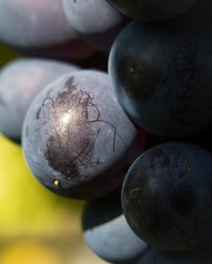 Αγιωργίτικο Κόκκινο Ξηρό Κρασί Νεμέας