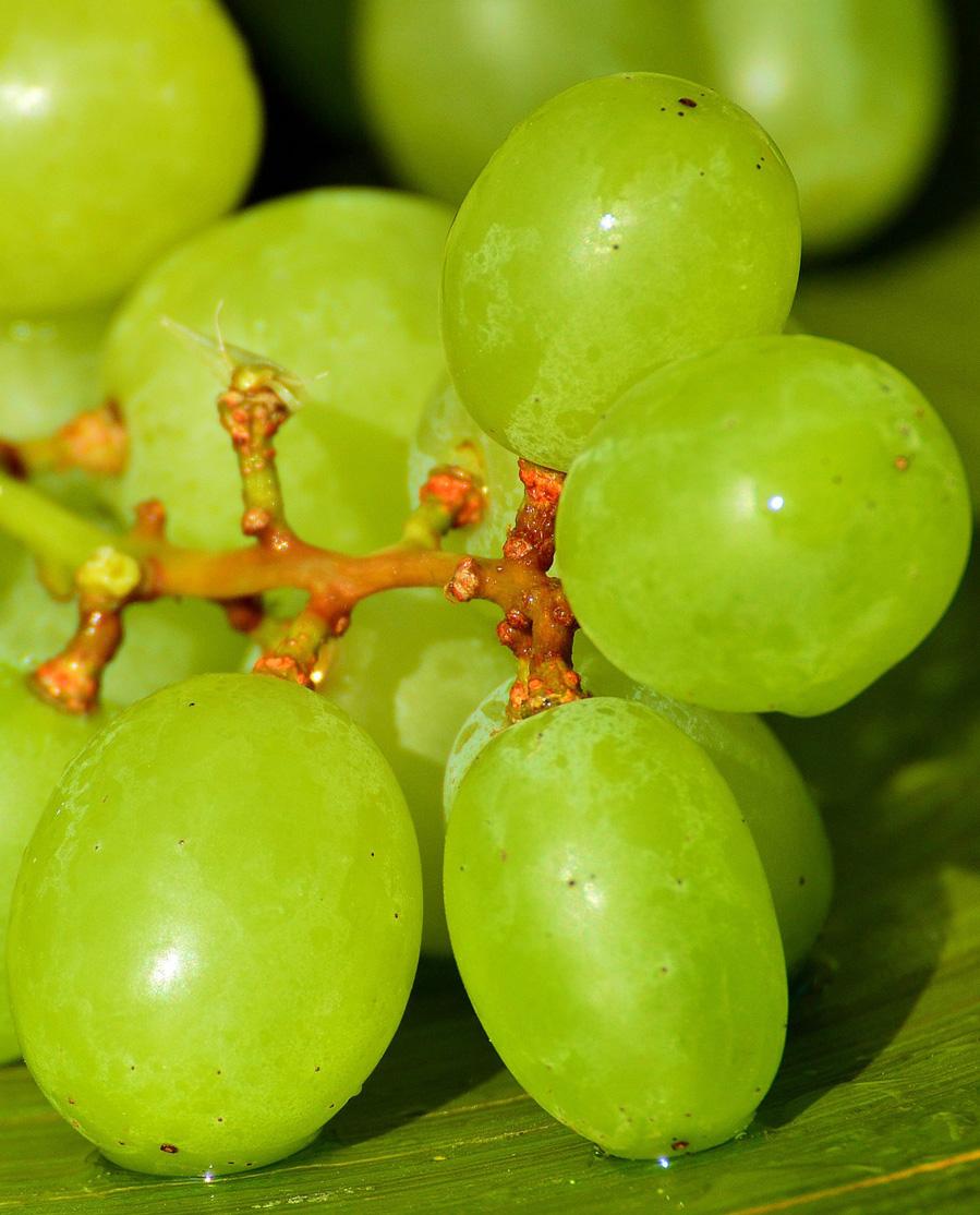 Ασύρτικο Λευκό Ξηρό Κρασί