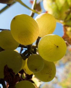 Βηλάνα Μοσχάτο Λευκό Ημίγλυκο Κρασί Κρήτης