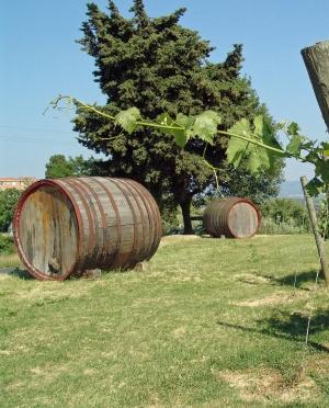 Μοσχάτο Αμβούργου Λευκό Ημίξηρο Κρασί Τυρνάβου