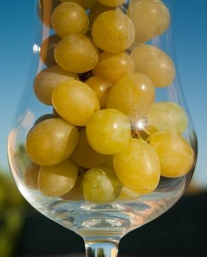Κρασί Λευκό Ημίξηρο από Μαλαγουζιά & Βαρδέα